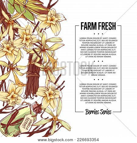 Vanilla Spice Poster With Space For Text. Trendy Food Spice Or Parfum Industry Component Vector Illu
