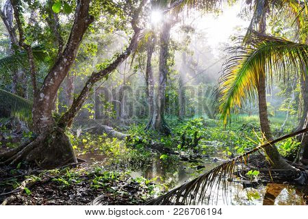 Misty Rainforest in  Costa Rica,  Central America