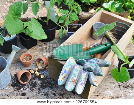 Gardening Tools In A Box With Vegetable Seedlings And Seeds With Gardening Tools On Wooden Backgroun