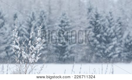 Winter - Field And Forest Covered With Snow