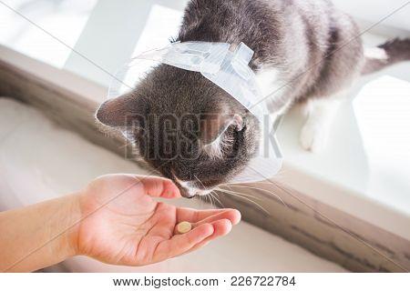 Pathetic Sick Grey Cat Patient Windowsill Feeding.
