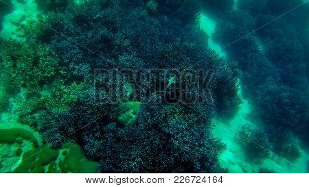 tropical Coral reef underwater growing on stones and floor poster