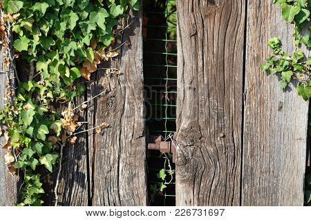 Zoom On An Very Old Wooden Fence