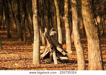 A Fallen Dried Tree Without Leaves On The Shore Of The Volga. Astrakhan Region. Russia. Concept: Wit