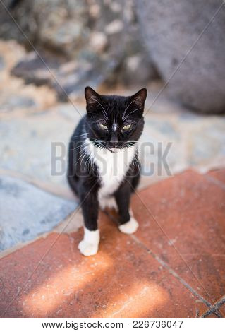 Black Cat With White Paws On Stone Floor Looking Up At Camera