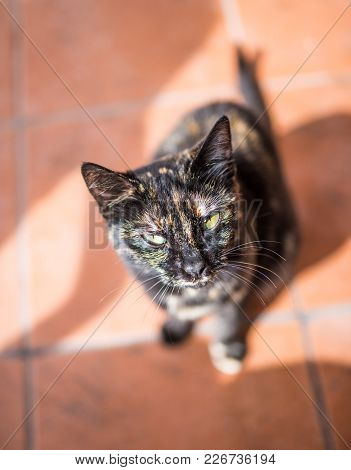 Young Tabby Cat On Stone Floor Looking Up At Camera