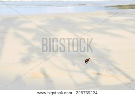 Light Wet Sand. Small Bird. Beautiful View.
