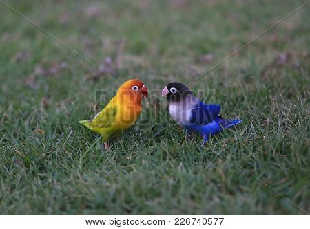 Beautiful Colorful Bird Blue And Yellow Parrot