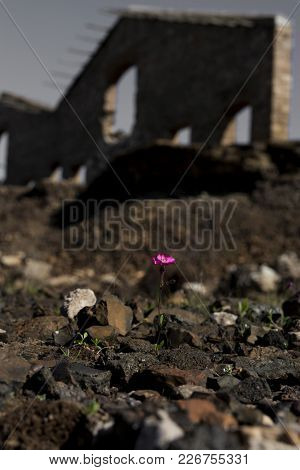 Purple Little Flower Infront Of Stone Ruins