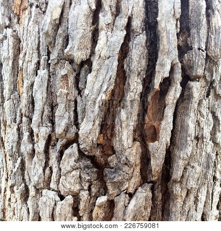 Macro Tree Bark Textures, Abstract Background, Natural textures, Organic background textures