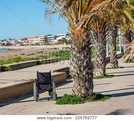 Wheelchair By A Palm Tree On The Shore