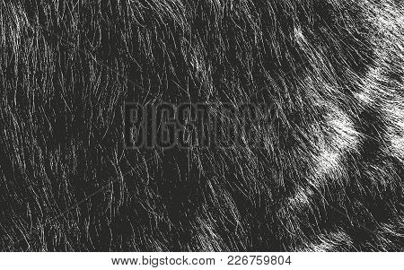 Distressed Overlay Texture Of Natural Fur, Grunge Vector Background. Abstract Halftone Vector Illust