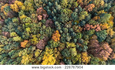 Autumn Colorful Forest Aerial Drone View Form Above