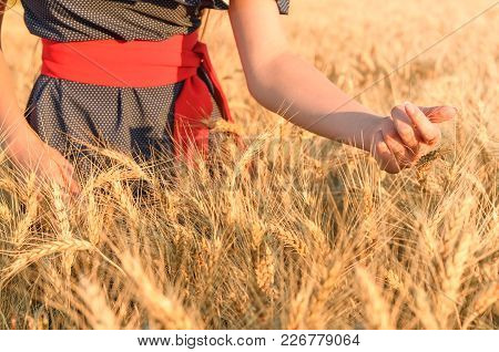 Women's Hands Collect Spikes In The Field