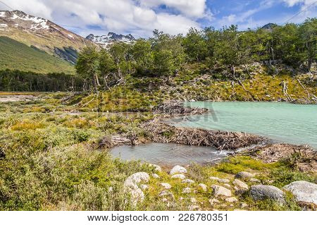Laguna Esmeralda Trail With Forest, Mountains And Beaver Dams