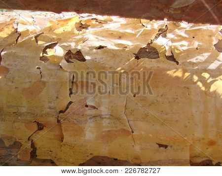 Unfinished Pine Board, Cut, Close-up, Bark, Knots, Background