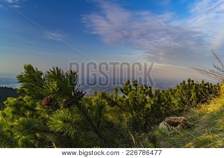 Small Spruce And Sky On The Jested