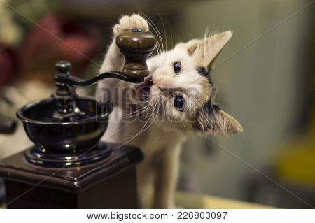 Cute Kitten Playing With A Coffe Grinder