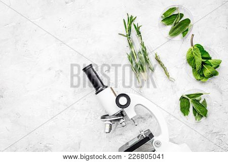Food Analysis. Pesticides Free Vegetables. Herbs Rosemary, Mint Near Microscope On Grey Background T