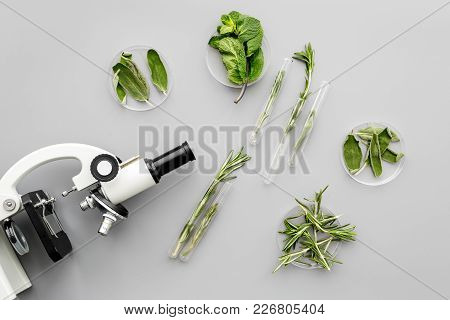 Safety Food. Laboratory For Food Analysis. Greens Near Microscope On Grey Background Top View.