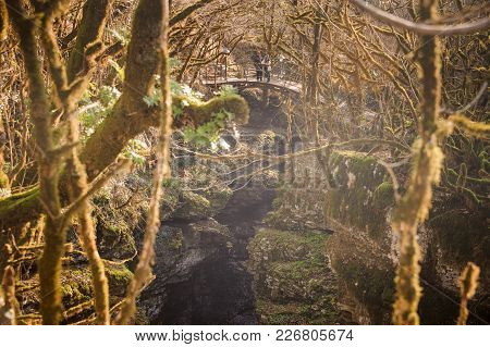 Two People On The Wooden Bridge In Mountain Forest With Exotic Trees In Autumn Season In Georgia. Ma