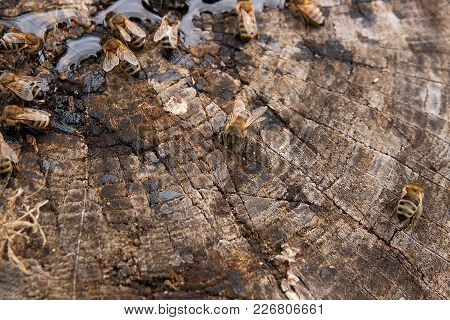 Bees And Wasp Swarming On Honey Drops On Vintage Wooden Background..