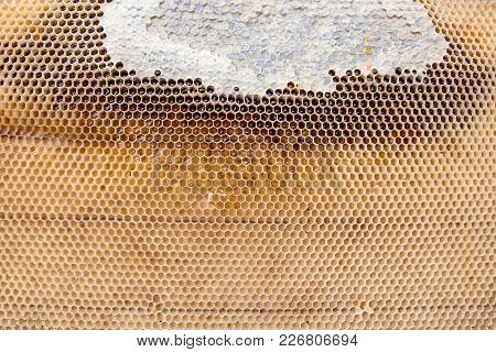 Close Up View Of Honeycomb With Honey As Background..