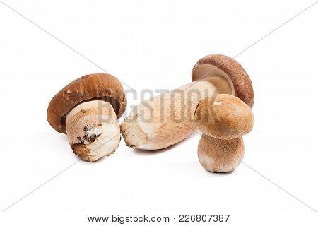 Several Porcini Mushrooms Known As Boletus Edulis Isolated On White Background.