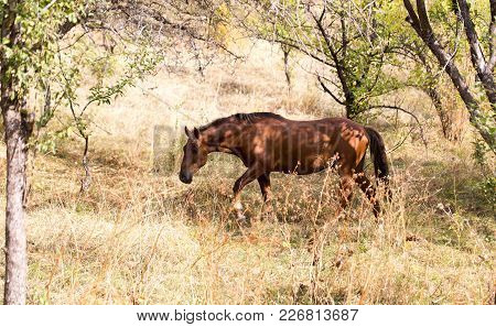 A Horse In A Pasture In Nature .