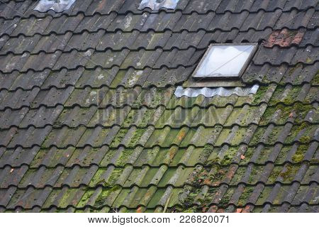 Moss building up on an old tile roof over a period of years of wet Scottish rain.