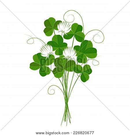 Shamrock Or Clover, Emblem Of Ireland And St Patrick's Day. Isolated.