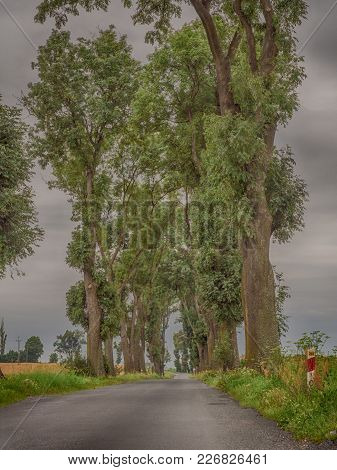 Old Deciduous Trees Along The Asphalt Road In Pomerania District Of Poland