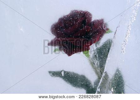 A Scarlet Rose, Frozen In Blue Ice