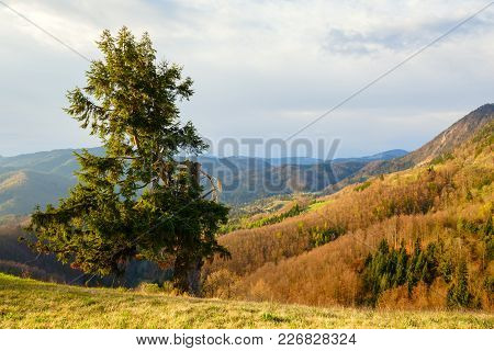 A Lonely Tree On Top Of A Hill