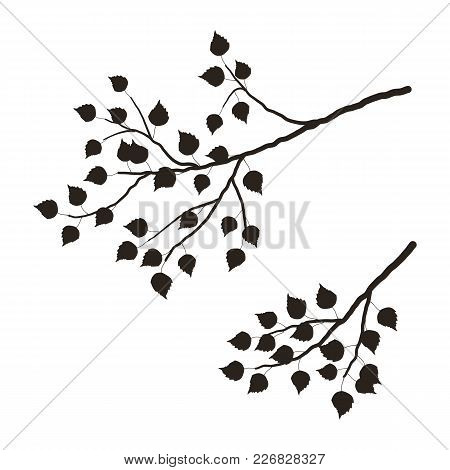 Silhouette Of A Tree Branch On A White Background. A Branch Of Birch Tree With Leaves.  It Can Be Us