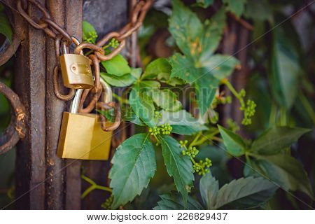 Two Golden Padlocks On A Rusty Chain Guarding The Entrance Through An Aged Gate, Closeup Image