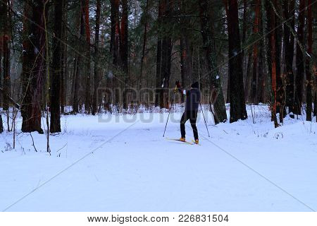 A Skier In Winter Forest. A Man Is Skiing In The Winter Forest. Rear View.