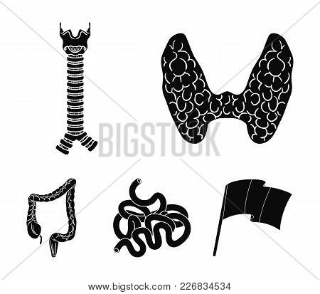 Thyroid Gland, Spine, Small Intestine, Large Intestine. Human Organs Set Collection Icons In Black S