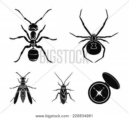 Spider, Ant, Wasp, Bee .insects Set Collection Icons In Black Style Vector Symbol Stock Illustration