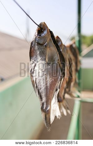 Sun-dried Salted Fish In The Air . In The Park In Nature