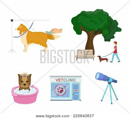 Walking With A Dog In The Park, Combing A Dog, A Veterinarian's Office, Bathing A Pet. Vet Clinic An