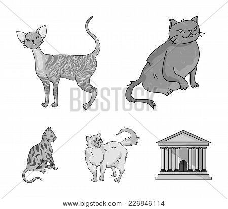 Persian, Cornish Rex And Other Species. Cat Breeds Set Collection Icons In Monochrome Style Vector S