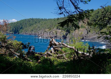 Rugged Coastline Of East Sooke Park, Vancouver Island, On A Sunny Day.