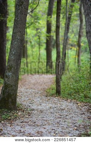 A Trail Winding Through The Woods In Missouri On An Early Fall Day With Leaves Covering The Trail.