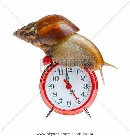 Snail On Clock