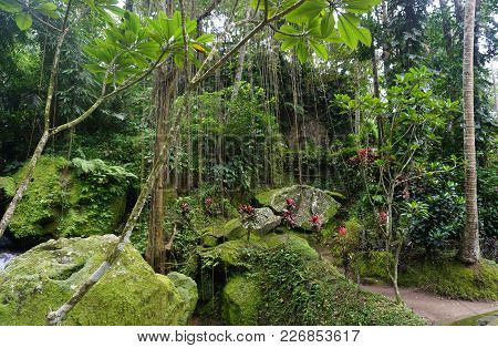 Jungle Very Green With Many Plants In Bali Indonesia