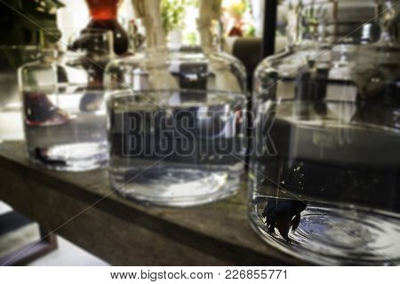 Siamese Fighting Fish In Water Bowl At The Shop, Stock Photo