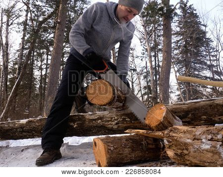 Outdoor Activities: A Man Saws Wood In A Forest For A Fire. Arrangement Of A Tent Camp In The Forest
