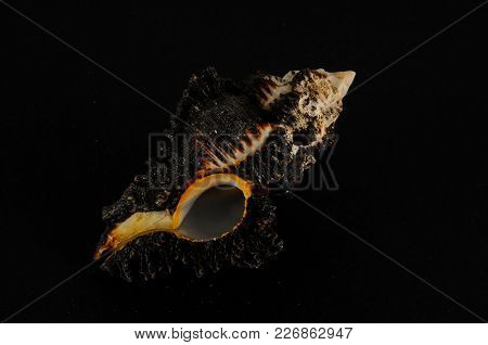 Photo Picture Of A Seashell Background Texture