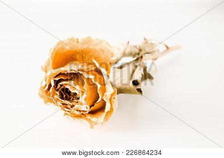 A Dried Rose Isolated On A White Background